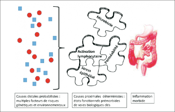 Représentation schématique de la physiopathologie des MICI
