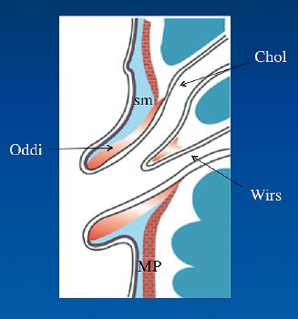 coliques hépatiques traitement naturel