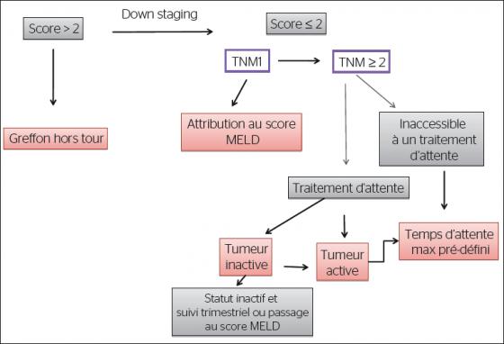 Algorithme de prise en charge des candidats à la greffe hépatique pour carcinome hépato-cellulaire pendant la phase d'attente : principes généraux