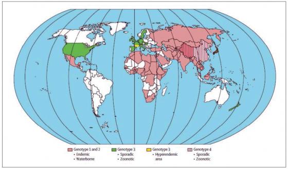 Figure 3. Distribution géographique génotypes responsable des infections VHE. (en blanc : données insuffisantes, mais plusieurs cas d'infection à génotype 3 ont été rapportés en Amérique du Sud) ; d'après (Kamar et al., 2012a)