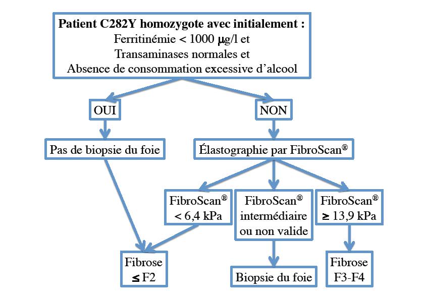 Figure 3. Proposition d'algorithme d'évaluation initiale de la fibrose chez le patient homozygote C282Y (d'après 14)