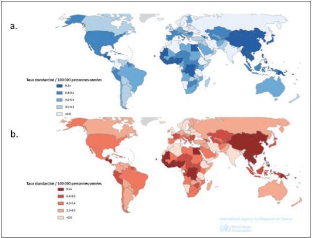Figure 1. Épidémiologie du cancer primitif du foie à l'échelle mondiale pour les deux sexes confondus selon l'OMS (http://globocan.iarc.fr/Pages/Map.aspx) : a – incidence ; b – mortalité