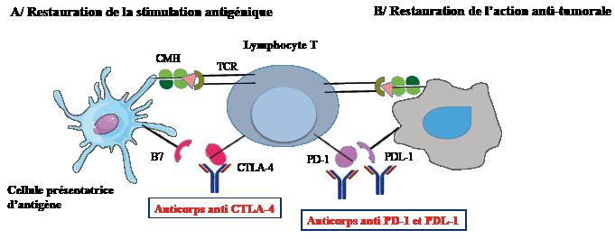 L immunotherapie cancer colorectal. Cum te poți proteja de cancer?