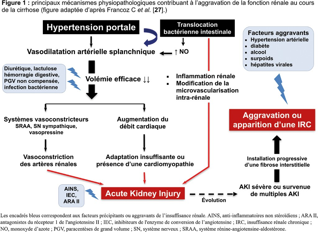 Les principaux mécanismes physiopathologiques impliqués dans l'IRA du patient cirrhotique.