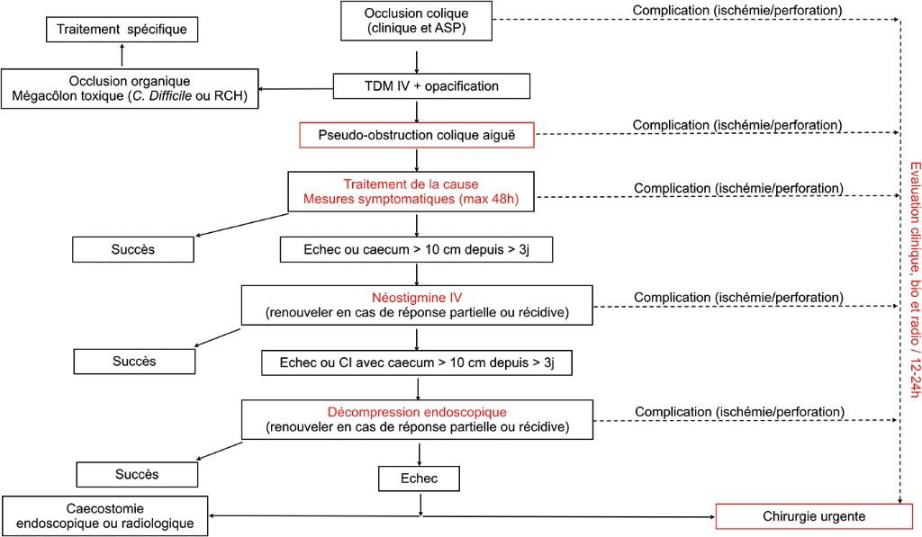 Algorithme 3. Proposition d'algorithme pour la prise en charge d'un syndrome d'Ogilvie