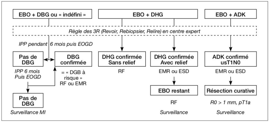Figure 3 - Stratégie thérapeutique en fonction de la présence d'une dysplasie ou d'un cancer superficiel au sein d'un EBO