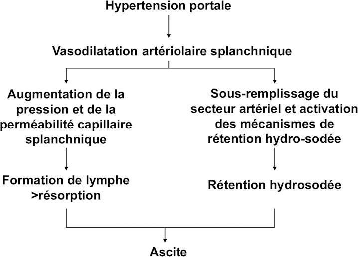 Figure 1 : Physiopathologie de l'ascite chez les malades atteints de cirrhose