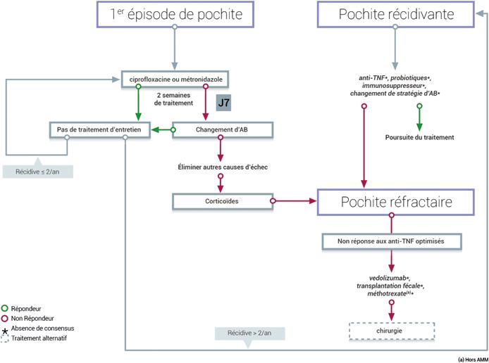 Figure 1 : algorithme de prise en charge de la pochite