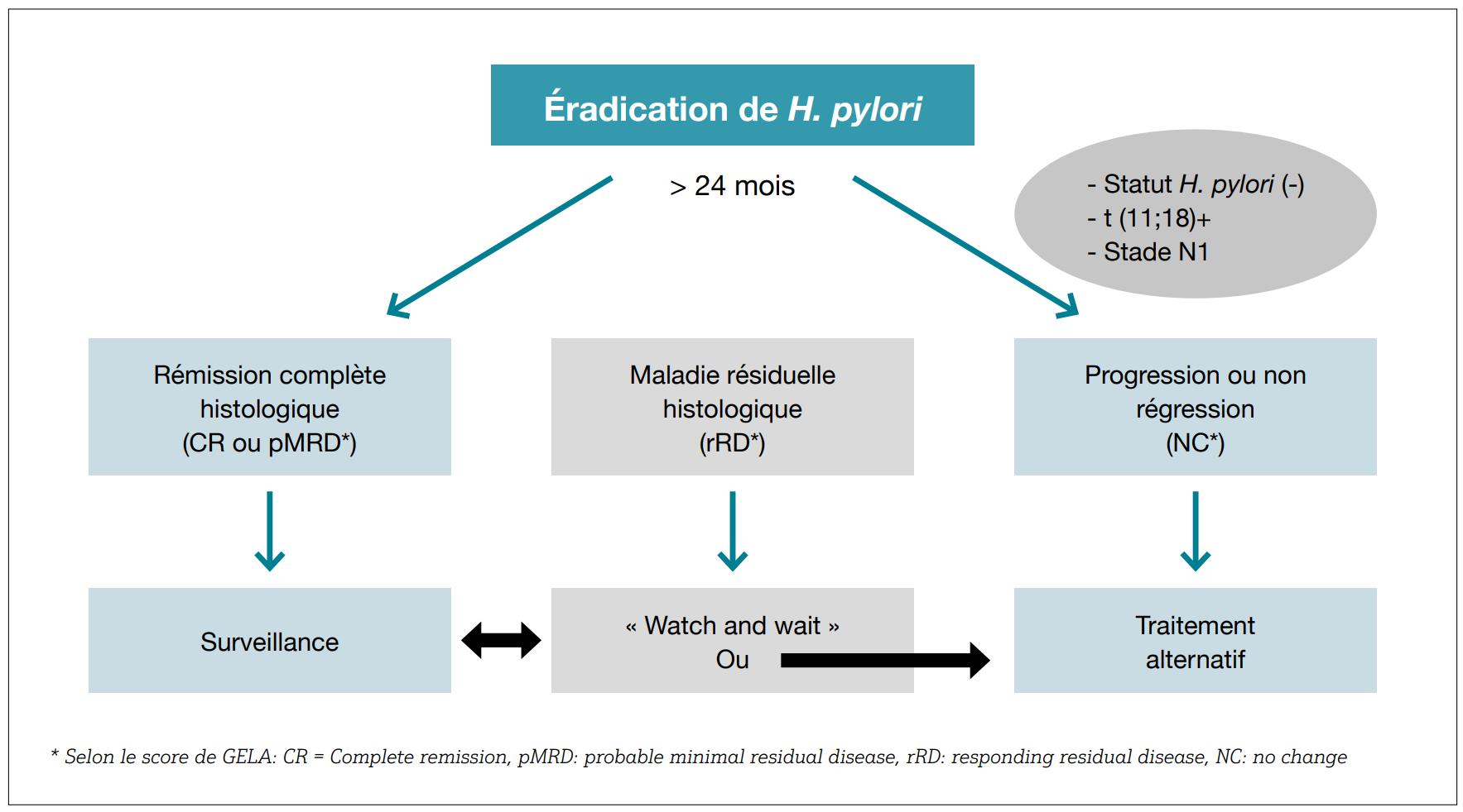 Schéma éradication lymphomes MALT par H. pylori