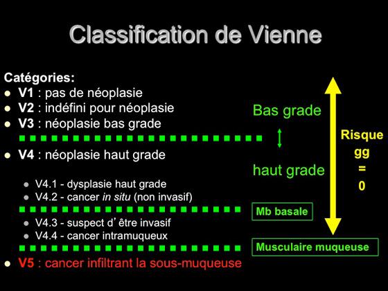 Figure 10 : classification de Vienne
